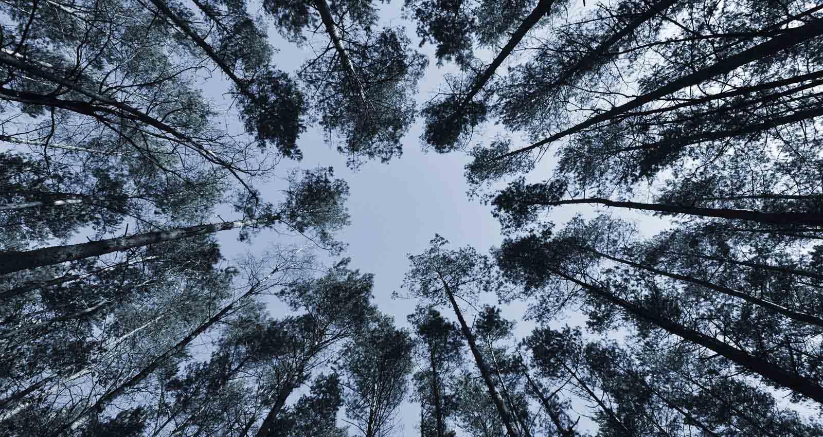 value tree